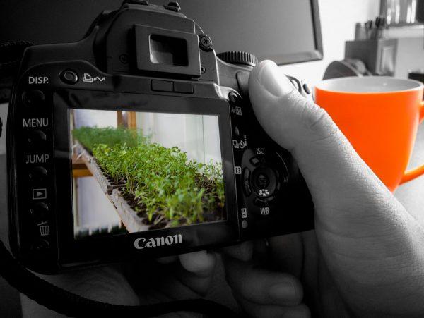 عکاسی چهار باغ دشت نیکان